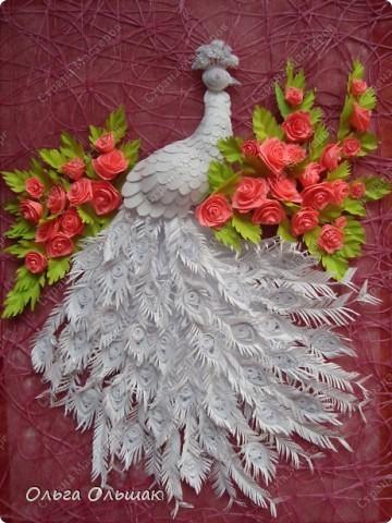 Знакомьтесь: конкурент первому павлину -белый павлин альбинос  на кусте роз. фото 5