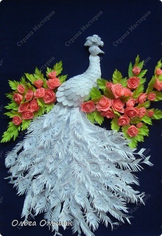 Знакомьтесь: конкурент первому павлину -белый павлин альбинос  на кусте роз. фото 6