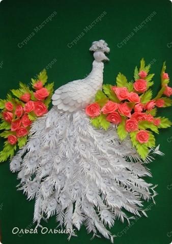 Знакомьтесь: конкурент первому павлину -белый павлин альбинос  на кусте роз. фото 7