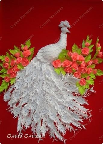 Знакомьтесь: конкурент первому павлину -белый павлин альбинос  на кусте роз. фото 8