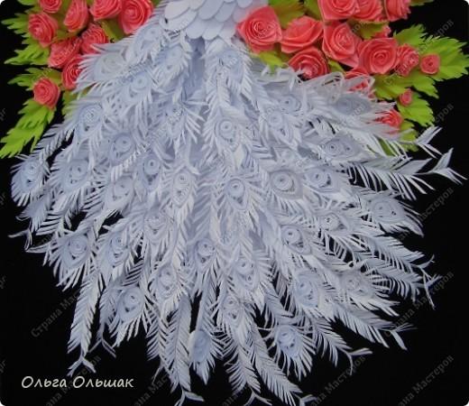 Знакомьтесь: конкурент первому павлину -белый павлин альбинос  на кусте роз. фото 4