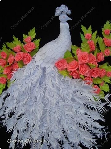 Знакомьтесь: конкурент первому павлину -белый павлин альбинос  на кусте роз. фото 2