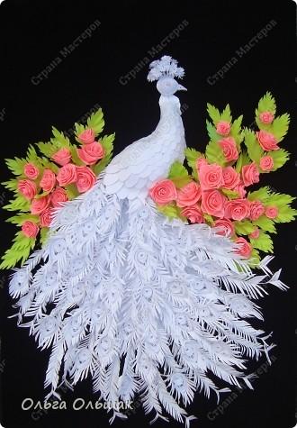 Знакомьтесь: конкурент первому павлину -белый павлин альбинос  на кусте роз. фото 1