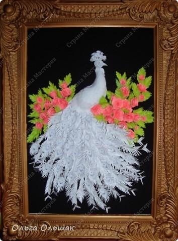 Знакомьтесь: конкурент первому павлину -белый павлин альбинос  на кусте роз. фото 12