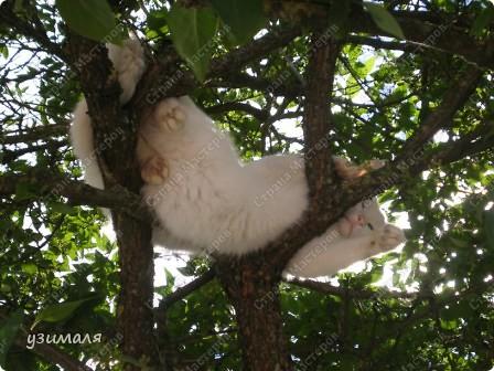 Лежбище котиков фото 2