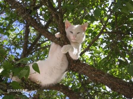 Лежбище котиков фото 3