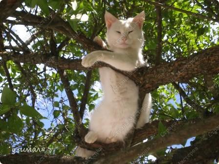 Лежбище котиков фото 4