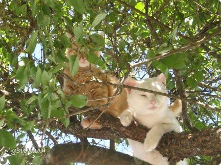 Лежбище котиков фото 6