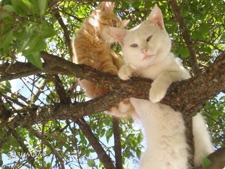 Лежбище котиков фото 7