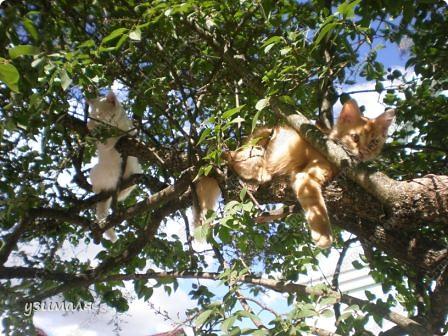 Лежбище котиков фото 8