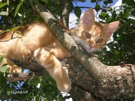 Лежбище котиков фото 9