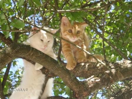 Лежбище котиков фото 10