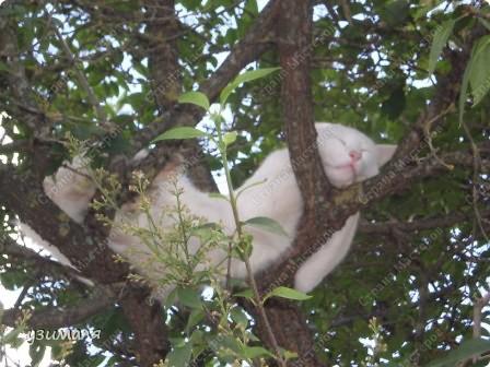 Лежбище котиков фото 12