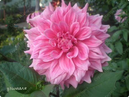Цветочная коллекция фото 2