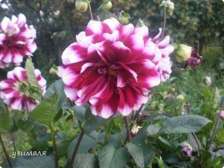 Цветочная коллекция фото 4