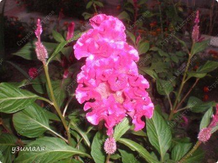 Цветочная коллекция фото 9