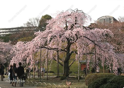 Поделка изделие Бисероплетение вишня в цвету Пайетки фото 4.