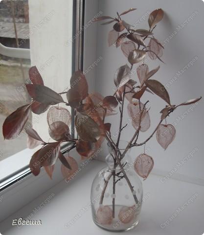 Веточки черноплодной рябины тоже покрыты аэрозольной краской фото 4