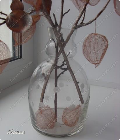Веточки черноплодной рябины тоже покрыты аэрозольной краской фото 5