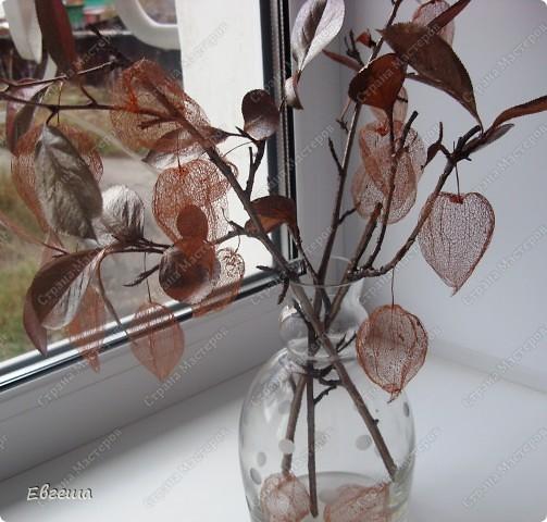 Веточки черноплодной рябины тоже покрыты аэрозольной краской фото 6