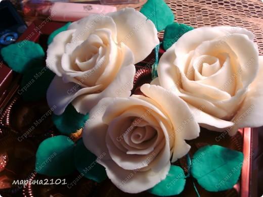 Розы первые и не совсем удачные фото 1