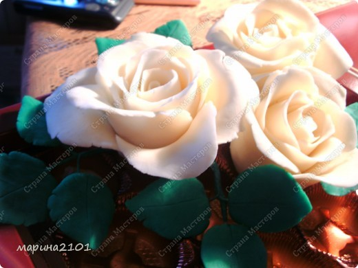 Розы первые и не совсем удачные фото 2