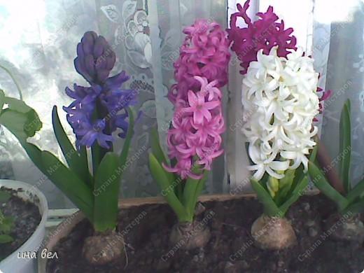 цветы -весна фото 2