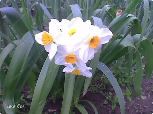 цветы -весна фото 3