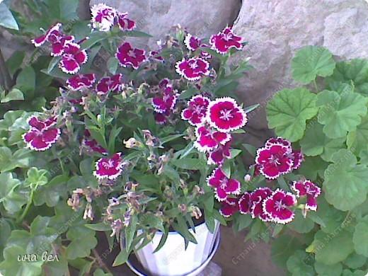цветы -весна фото 6