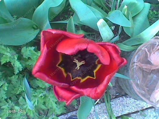 цветы -весна фото 4