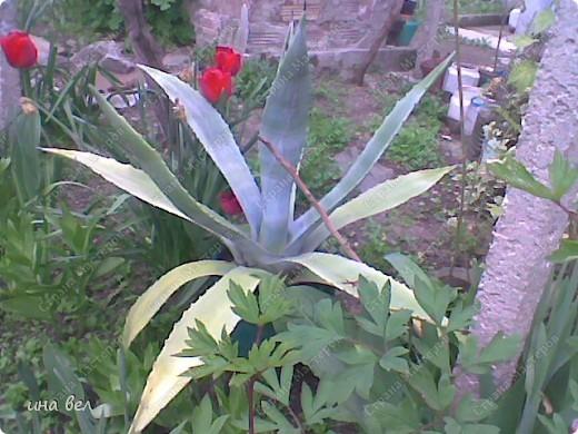 цветы -весна фото 5