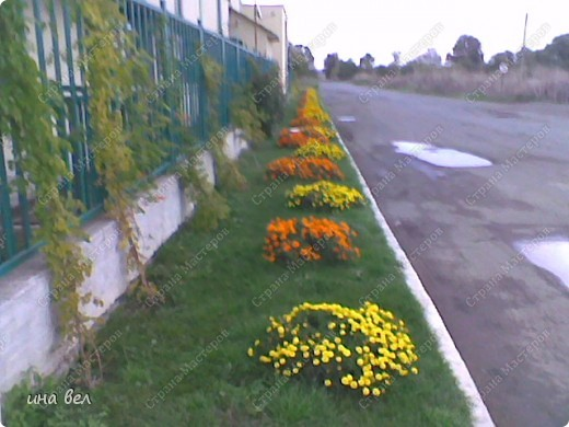 цветы -весна фото 1