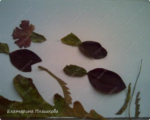 Работа с природным материалом фото 4