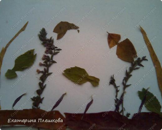 Работа с природным материалом фото 3