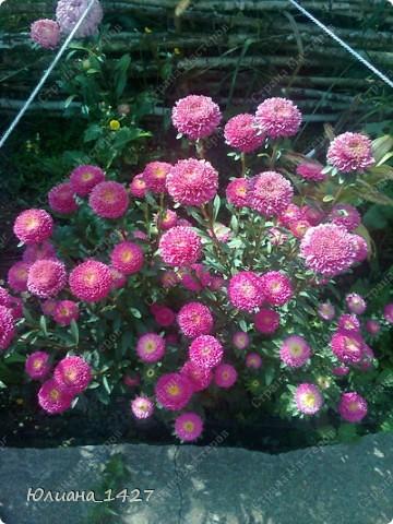 Садовое искусство 2 фото 8