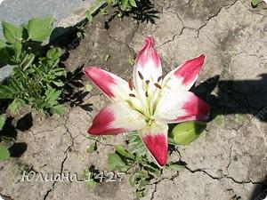 Садовое искусство фото 1