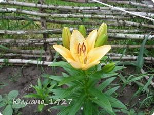 Садовое искусство фото 2