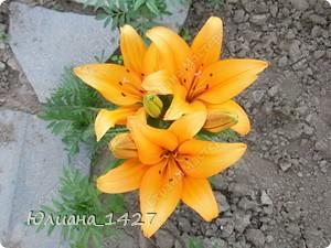 Садовое искусство фото 3