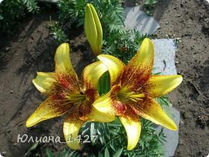 Садовое искусство фото 5
