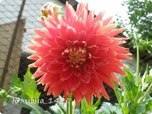 Садовое искусство 3 :) фото 1