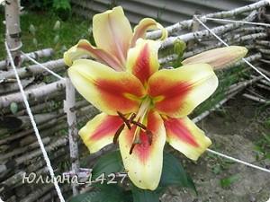 Садовое искусство фото 6