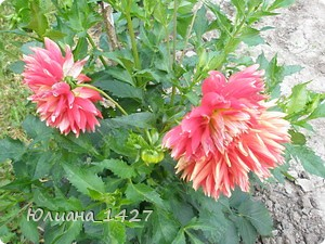 Садовое искусство 3 :) фото 3