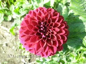 Садовое искусство 3 :) фото 5