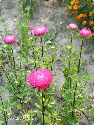 Садовое искусство 2 фото 2