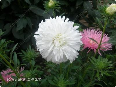Садовое искусство 2 фото 4