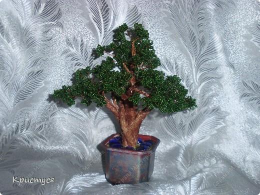 Мое первое дерево