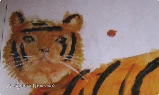 Тигр года фото 2