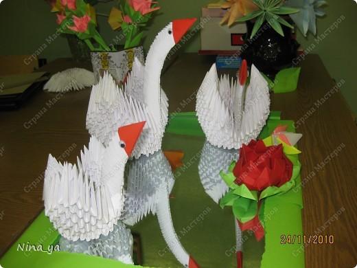 Наши  лебеди.