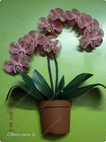 Мечты сбываются: у меня тоже распустились орхидеи. фото 1