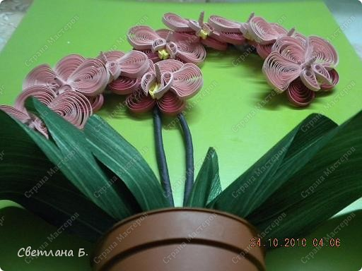 Мечты сбываются: у меня тоже распустились орхидеи. фото 2